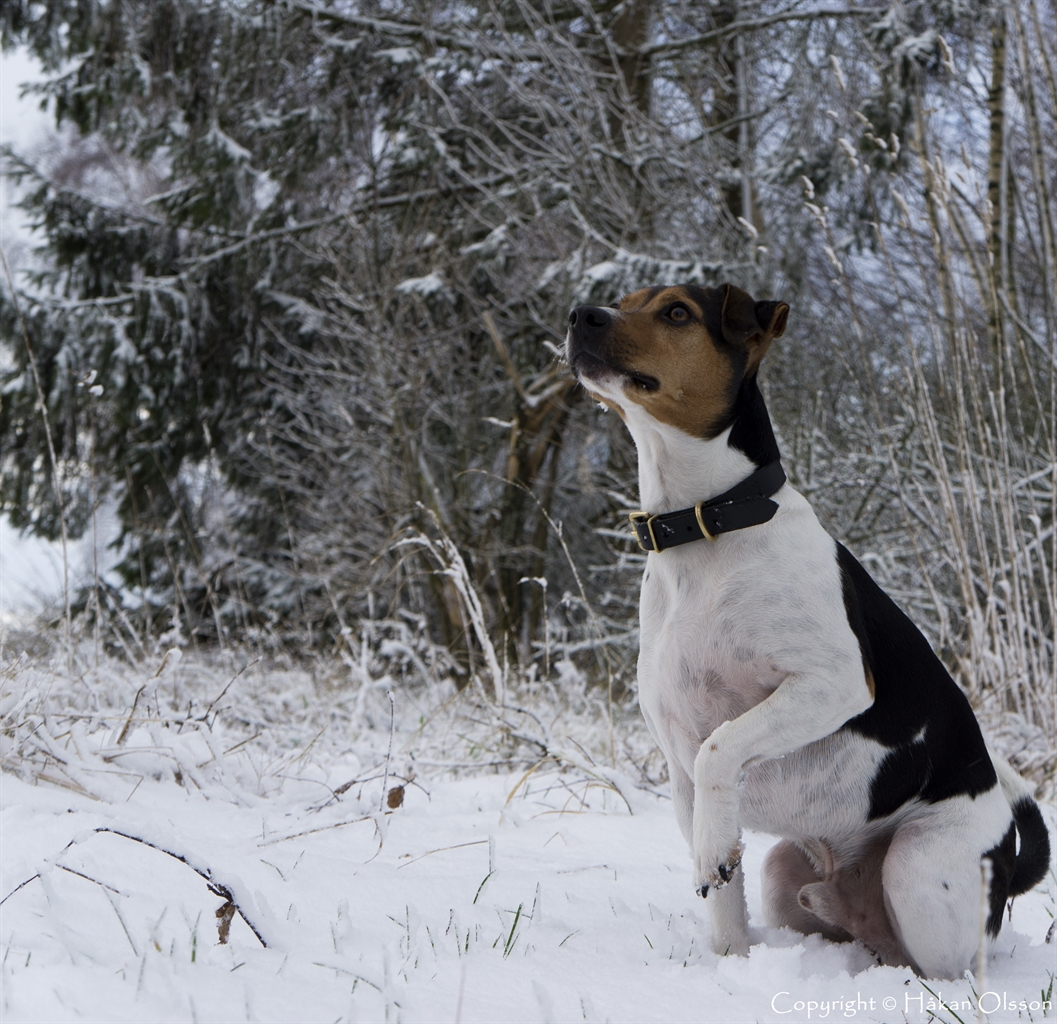 Pose in the snow